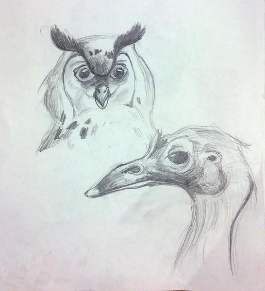 Марко Васић VI-2 - Птице